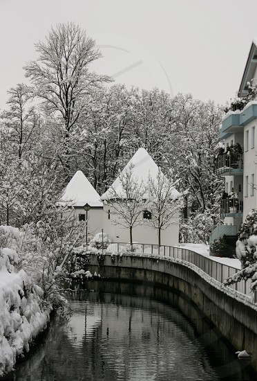 trees and house covered with snow photo