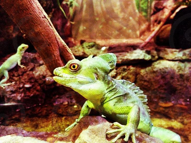 Sydney zoo photo