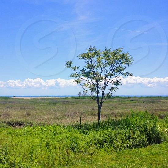 small tree in open field photo
