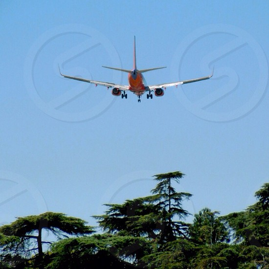 airplane flying on top of the trees view photo