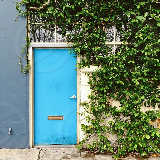 Blue door vines photo