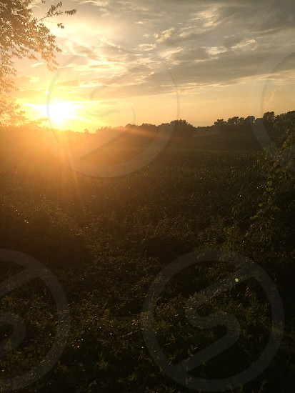 Sunset in the weeds photo