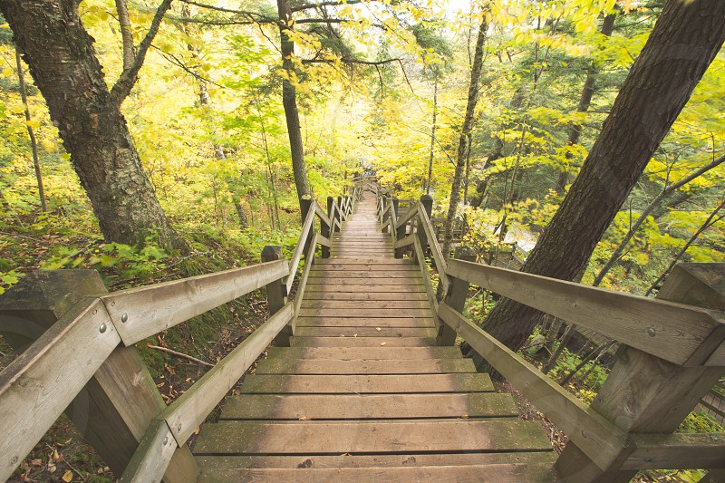 A long staircase through the woods photo