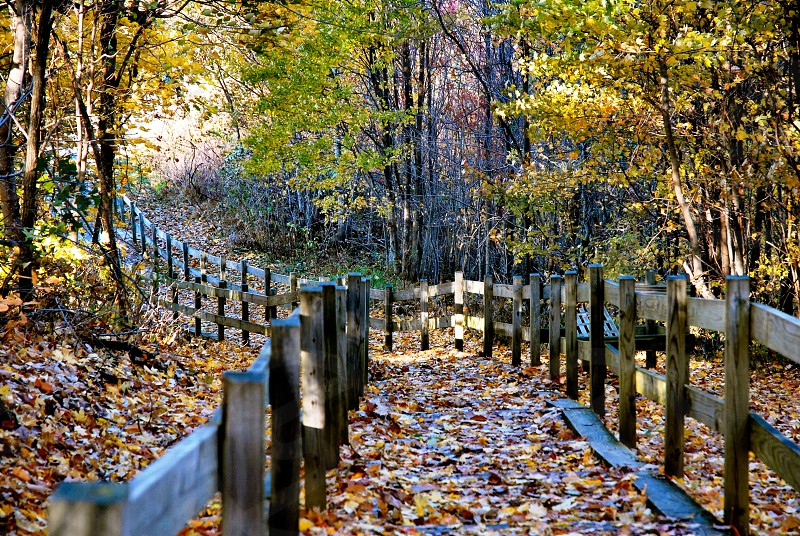 Autumn trail into the woods photo
