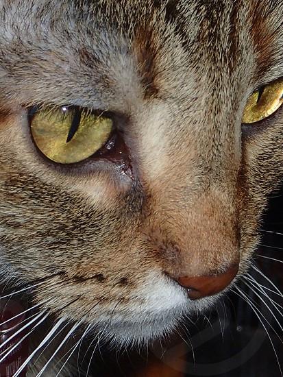 Cat eyes scary beautiful watching photo