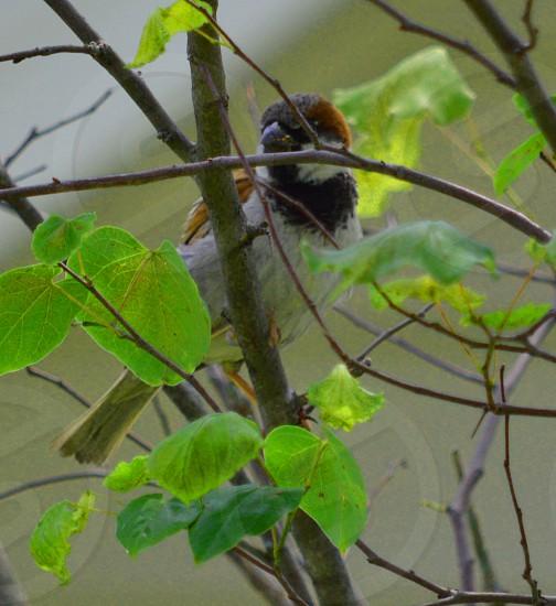 Birdtree photo