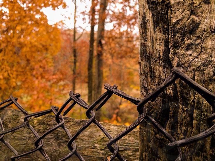 Bokehed woods  photo
