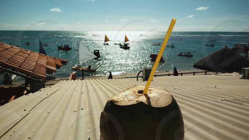 coconut sun sea summer travel beach leisure ocean photo