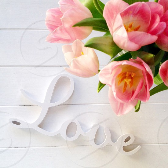 white love sign under pink flowers with green leaves photo