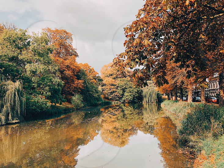 Autumn iPhone Holland  photo