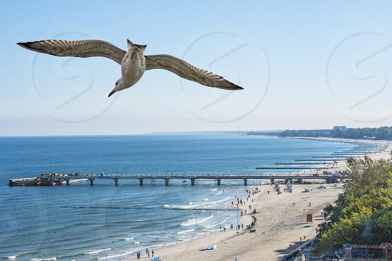 sea gull flying over beach  photo