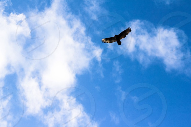 photo of a bird flying photo