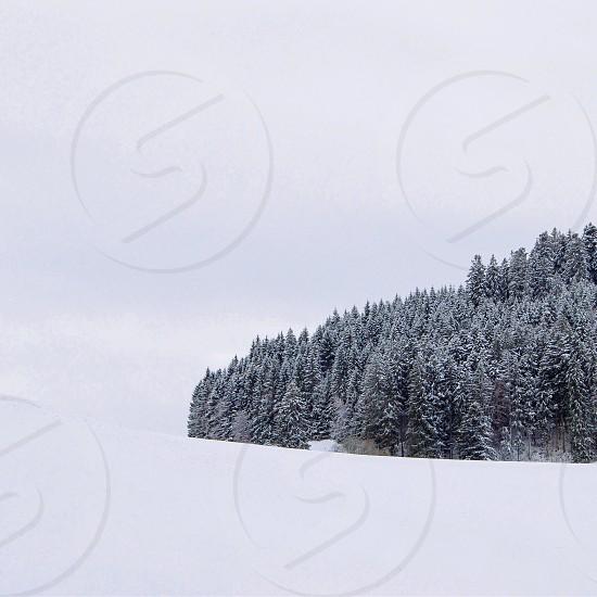 Minimal snowy woods.  photo