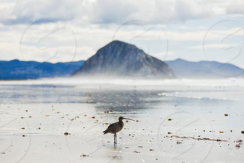 bird morro morro rock beach fog mist clouds nature sandpiper photo