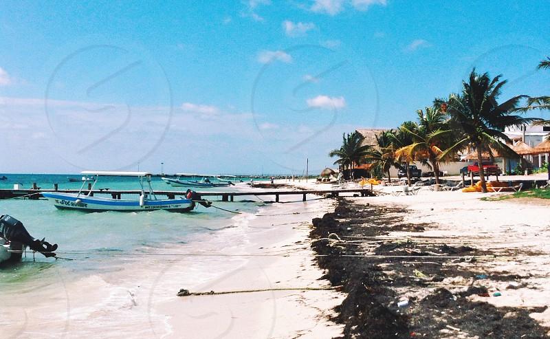 seashore and coconut tree view photo