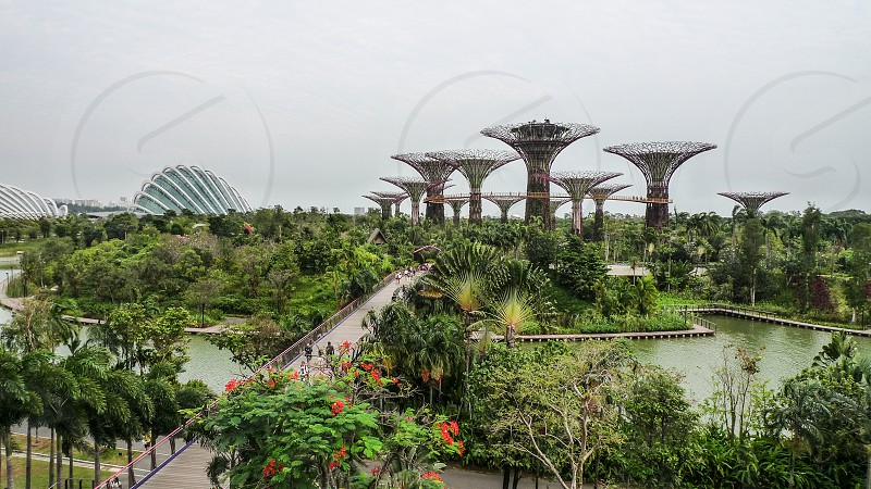 Gardens by the Bay in Singapore photo