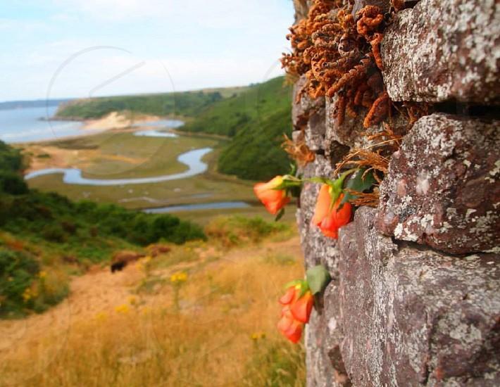 Swansea travel photo colours rose seascape landscape photo
