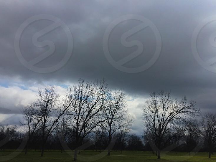silhouette of trees under gloomy sky photo