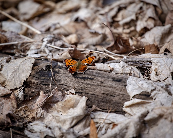 Low to the ground with a beautiful moth  photo