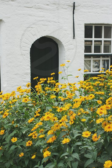 Cottage garden in Belgium. photo