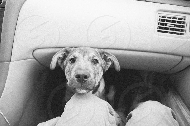 dog and glove compartment  photo