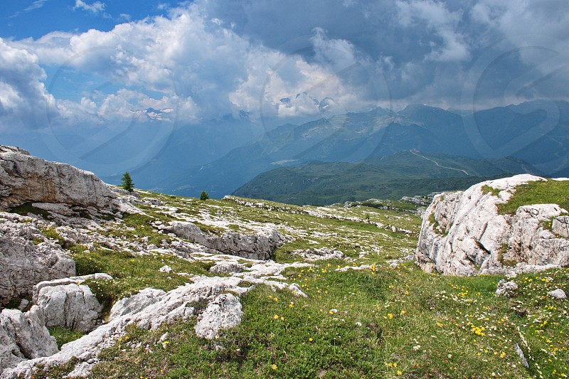 Flowering meadow in Brenta Dolomites with rocks and mountains in the background photo