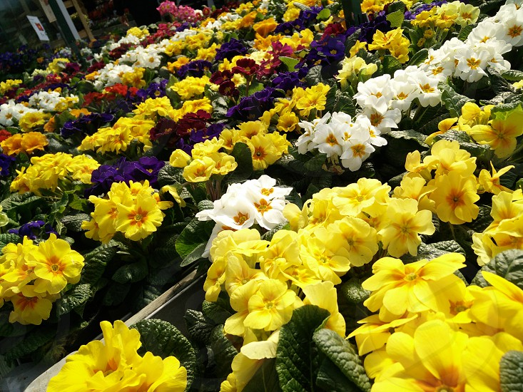 #Spring colors in full life photo