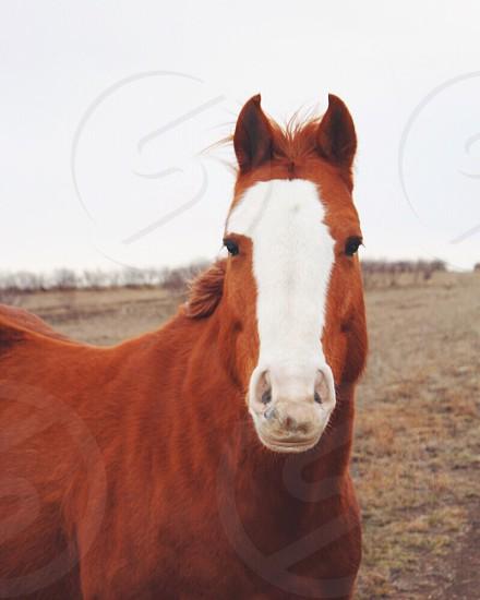 Horse wildlife country farm outdoors photo