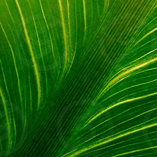 Plant life photo