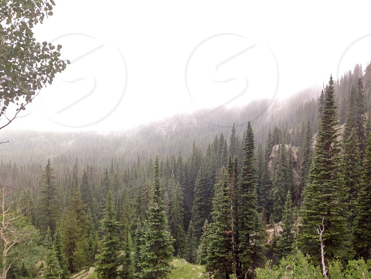 Colorado Rocky Mountains pines trees forest mist fog rain storm water trail hiking nature wilderness photo