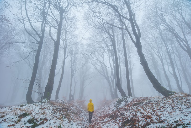 Fall twisted beech forest with the fresh snow. Czech Republic. photo