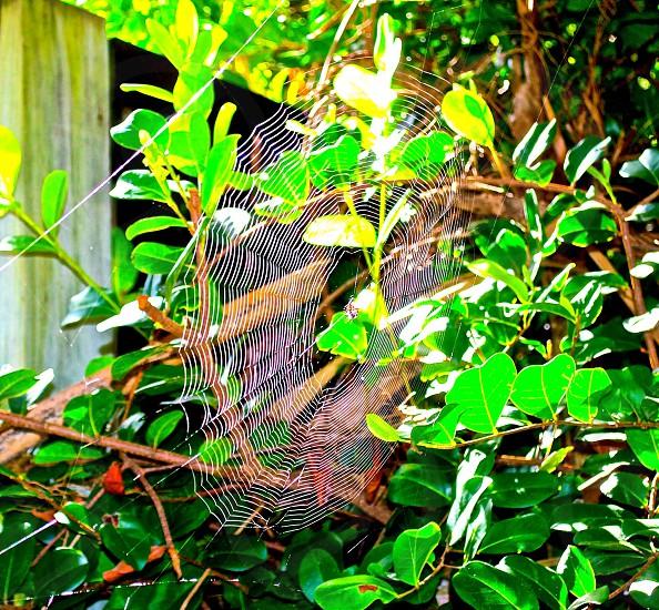 Spider web in Lantana Park photo