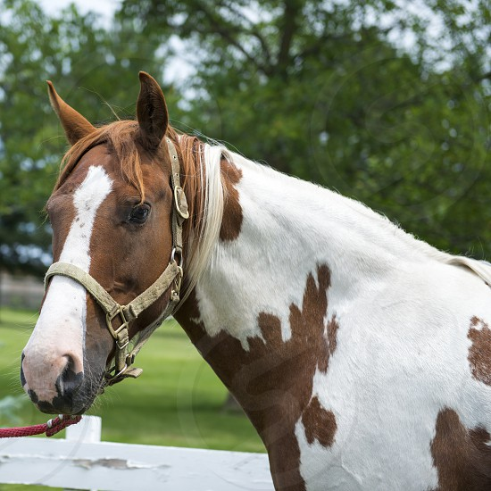 Brown and White Horse Side Profile photo