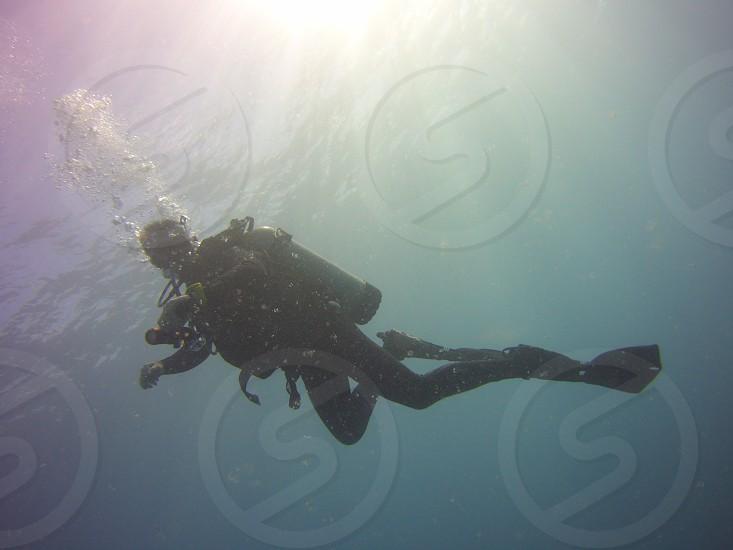 Scuba diving Maui Hawaii photo