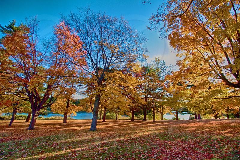 yellow and orange leafed trees under blue sky photo