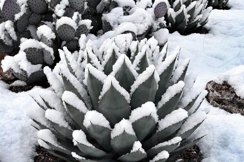 Winter snow in Tucson  photo