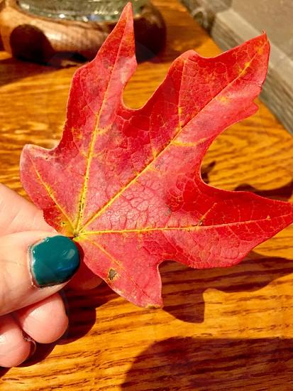 #fall #autumn #color #orange #nails #green photo