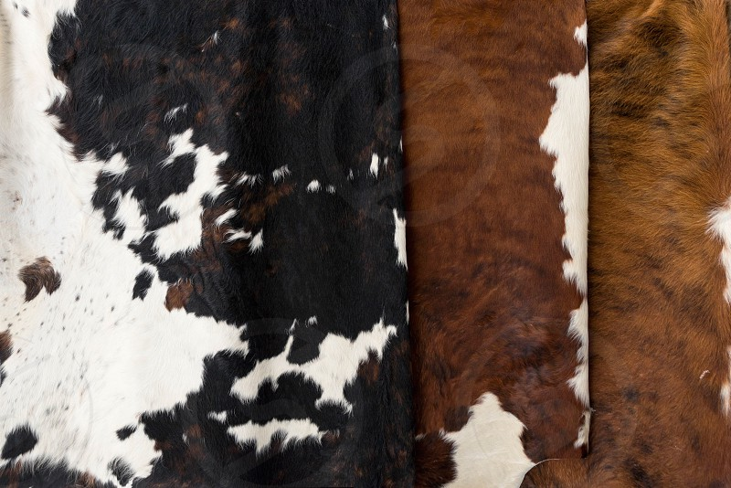Cowhide for use as a background in full frame photo