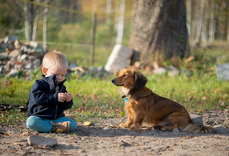 Baby boy playing outside with dog photo