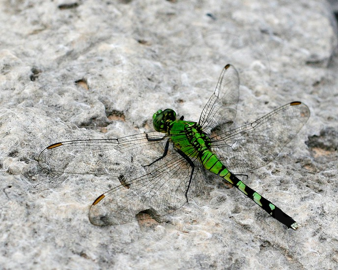 green and black dragonfly on stone photo
