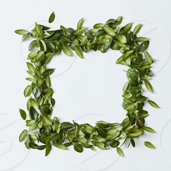 Green leaves arranged in square shape on white background photo
