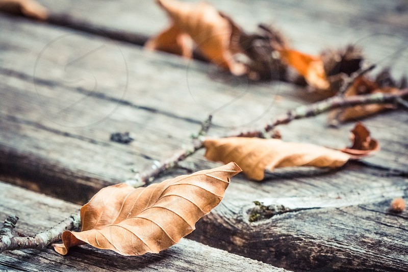 Autumn Dry Leaves On Aged Wooden Table photo