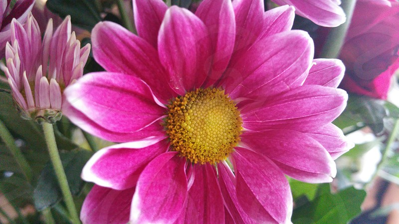 Pink flower close-up photo