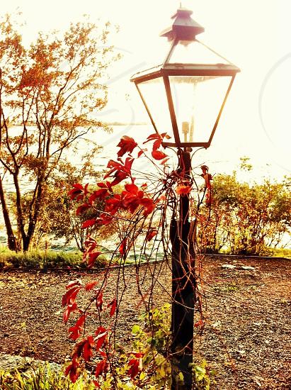 Streetlight leaves nature photo