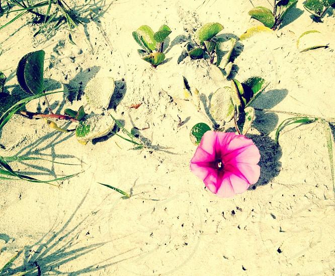 beach flower photo