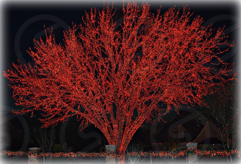 Tree covered in red lights photo