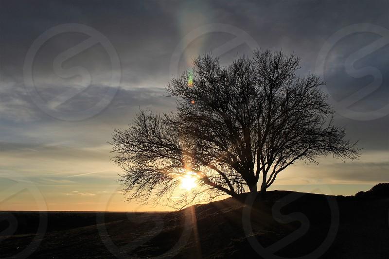 Sun rays through the almond tree. photo