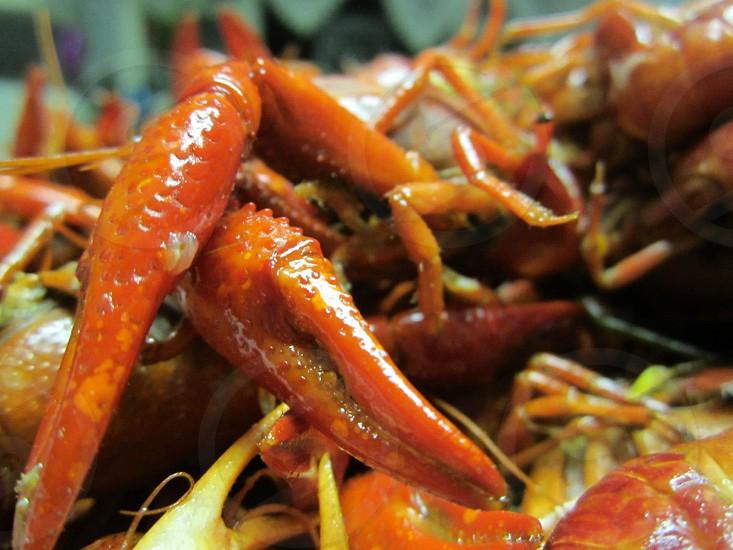 Crawfish photo