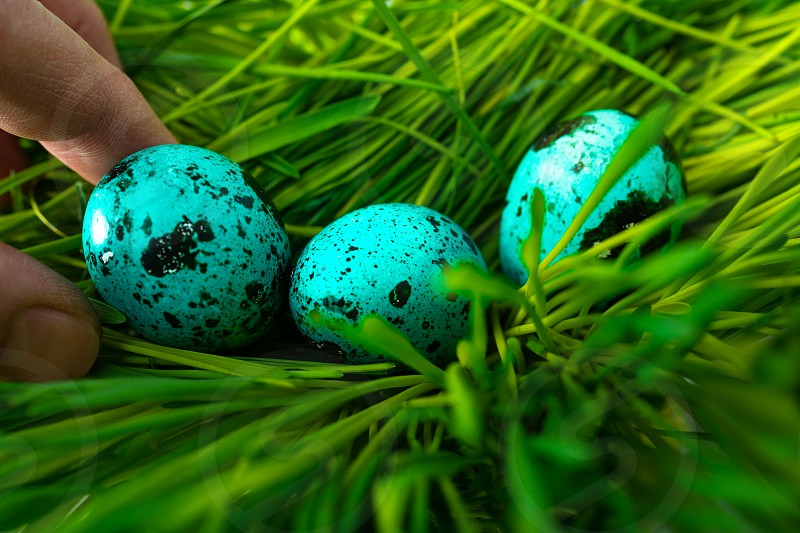 Blue colored Easter egg in the grass photo