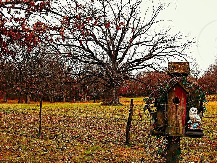 gray owl figure beside brown wooden bird house photo